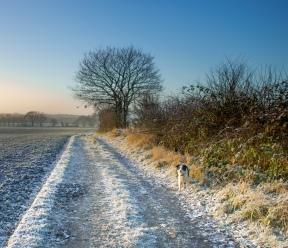 frosty-tracks