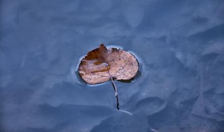 leaf-1-of-1