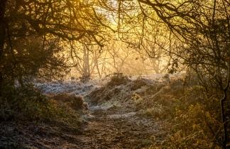 Path to Narnia?