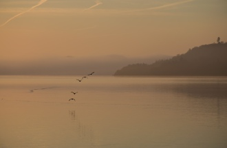 Early Birds skimiing the calm lake surface