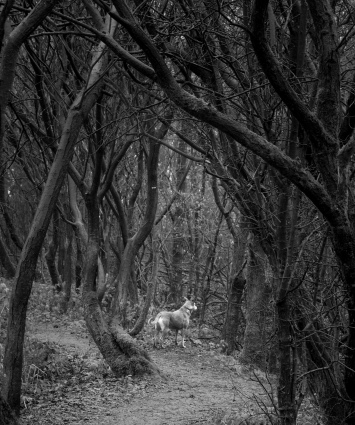 Dog in the Dark Woods